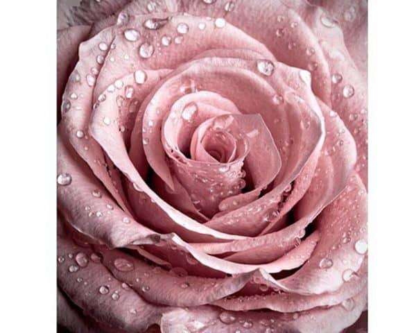 Broderie Diamant Nid De Rose